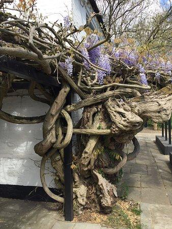 Farnham Common, UK: photo3.jpg