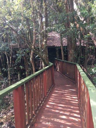 The Mouses House Rainforest Retreat: photo1.jpg