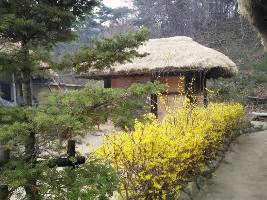 Andong, Sydkorea: Thatched roof in lovely setting
