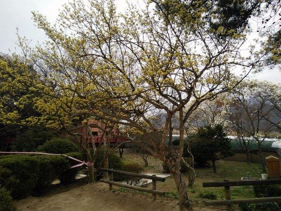 Andong, Zuid-Korea: Walking through the village
