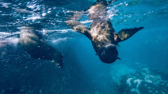 Narooma, Australia: Shot on GoPro! That's how close the seals are!
