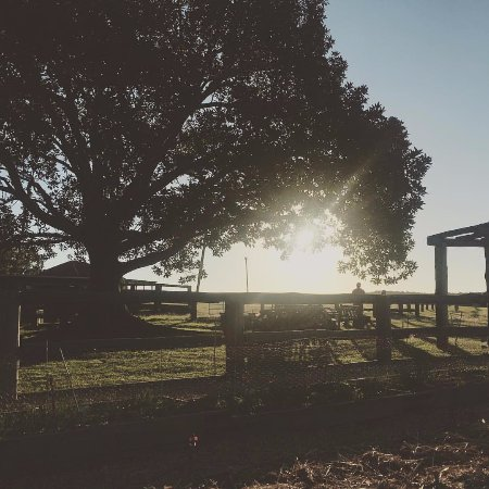 Grandchester, Australia: The view from the market garden