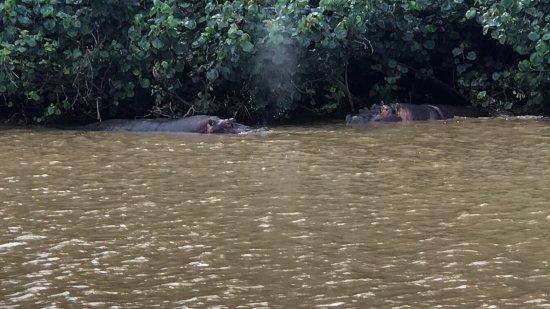 Сент-Люсия, Южная Африка: Hippo and Croc Cruise