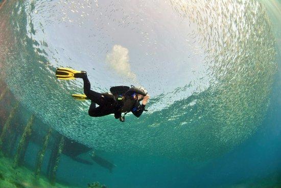 Deep blue dive cnter omar picture of deep blue dive - Deep blue dive centre ...