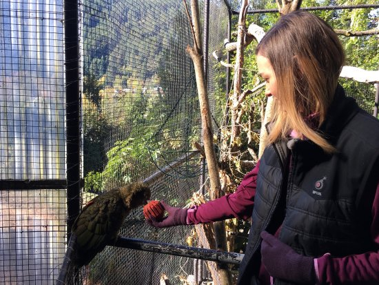 Kiwi Birdlife Park: Great place for animal lovers!