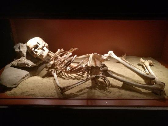 "Museo de Nerja: ""Pepita"". Esqueleto epipleolítico expuesto en la sala de prehistoria"