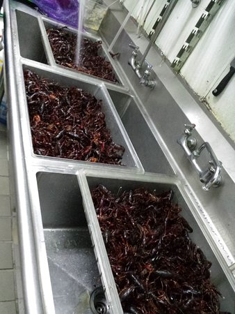 Union City, CA: Washing Crawfish