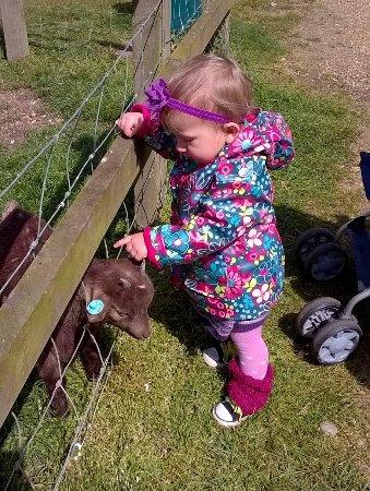 Woodbridge, UK: One kiddie petting another !