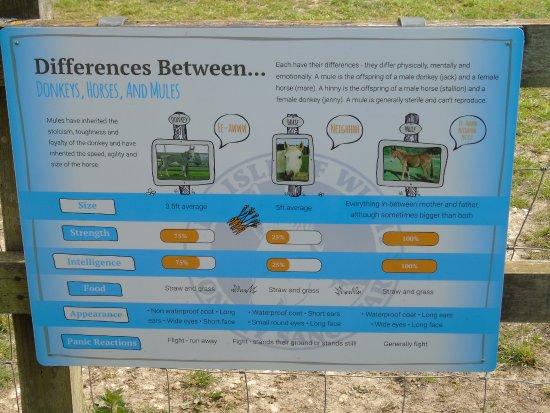 The Isle of Wight Donkey Sanctuary : Donkeys, horses & mules explained well.