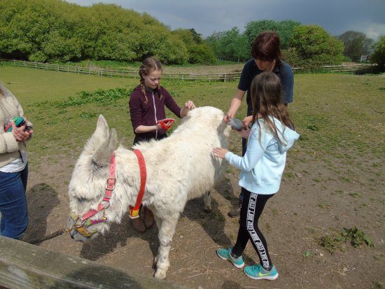 The Isle of Wight Donkey Sanctuary : Donkey walking & grooming £5 donation per person.