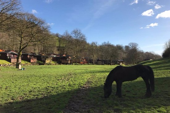 Windermere, UK: Horse Riding at Limefitt Park