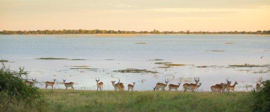 Chobe National Park, Botswana: Game Drive