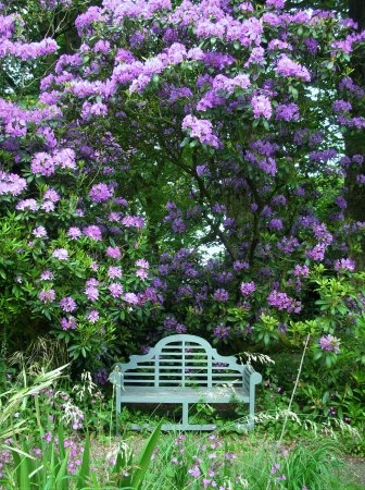 Chorley, UK: Double Purple Rhododenron with Luyens garden seat