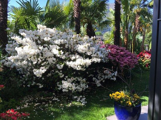 Tegna, Zwitserland: Garten des Hotels