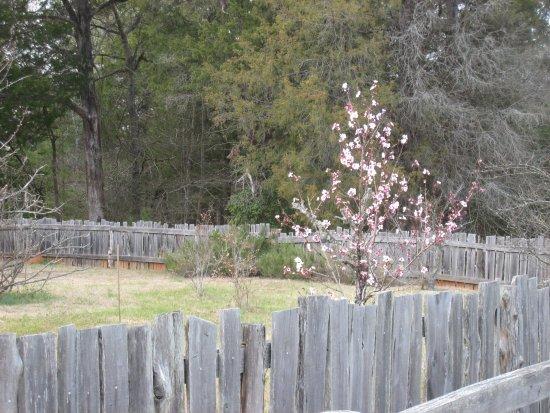 Lancaster, Carolina del Sud: Garden area