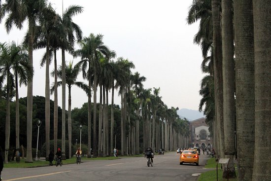 National Taiwan University : Campus de la NTU, avenida con palmeras.