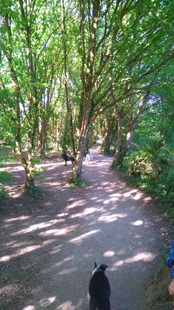Penarth, UK: paths nice and dry now