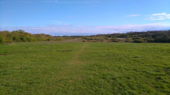 Penarth, UK: just one of the open fields the dogs love