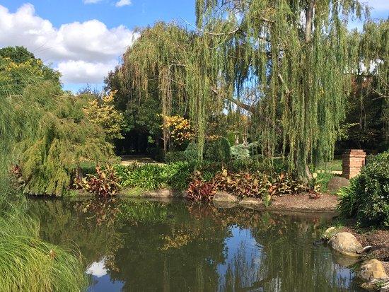 Pokolbin, Australia: Japanese Garden