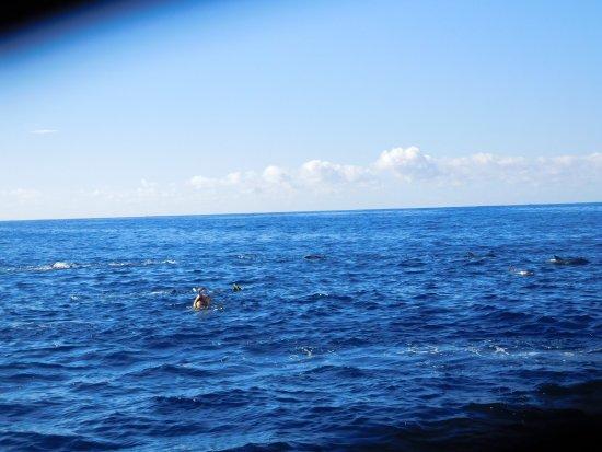 Grande Riviere Noire: Des dauphins de tous côtés!!!