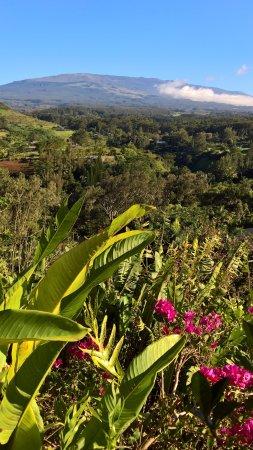 Maui Tradewinds: Aussicht