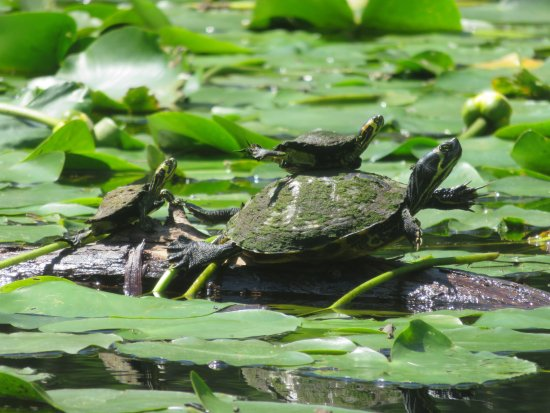 Southport, Carolina del Norte: kayak tour