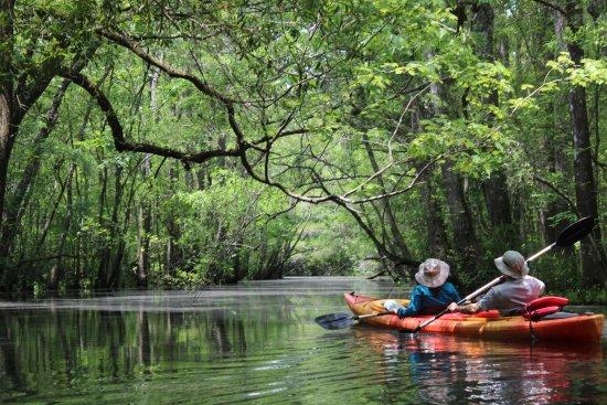 Southport, Carolina del Norte: Swamp Kayak Tour