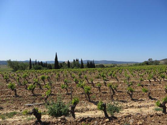 Boutenac, Francia: Les vignes