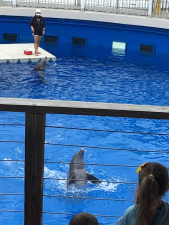 Gulfarium Marine Adventure Park: Dolphin Greeting