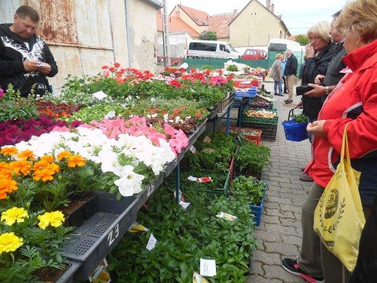 Keszthely, Hungary: Kora tavaszi virágok