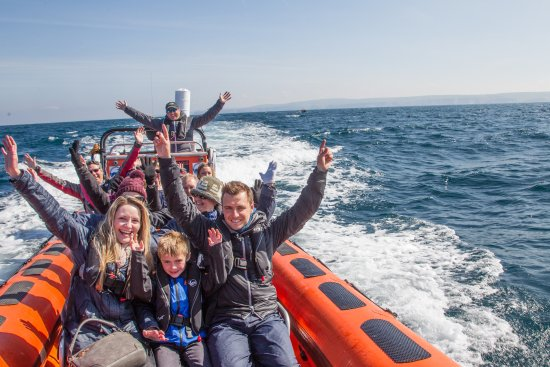 Padstow Sealife Safari: Loving it!