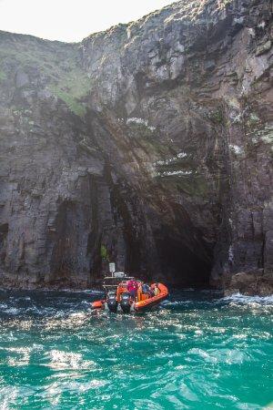 Padstow Sealife Safari: Exploring the seals cave