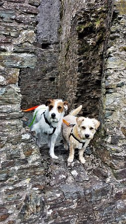 Lostwithiel, UK: Happy travellers as dogs are allowed :)
