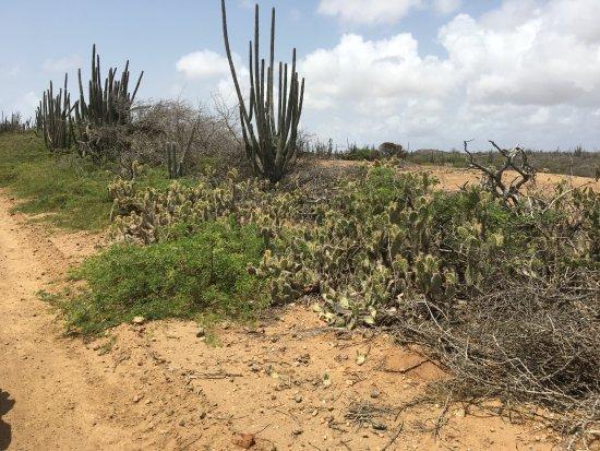 Kralendijk, Bonaire: The region is a desert, complete with cactus
