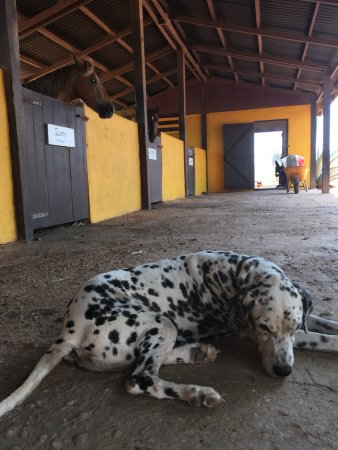 "Kralendijk, Bonaire: This is the dog, Flecki (""Spot""), and a few of the 11 horses"