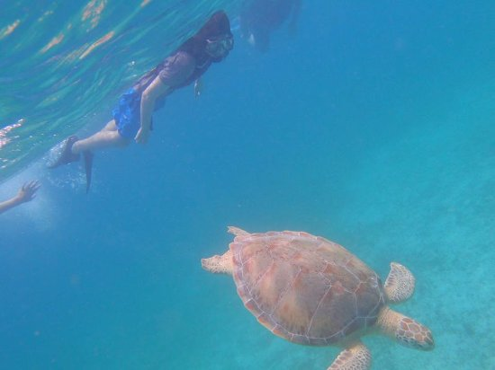 Caneel Bay, Σεν Τζον: Mark was able to snag this photo of my son swimming with Crush