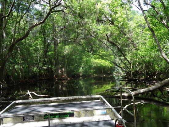 Lake Panasoffkee, FL: The sort of scenery expected.