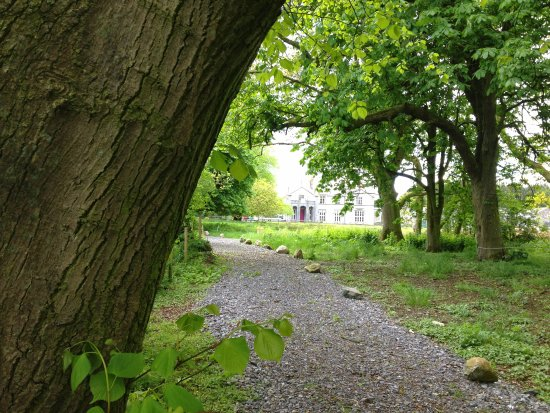 Ballyjamesduff, Ιρλανδία: Our stunning forest river walk way