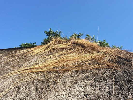 Hilltop Camp: Damaged thatch