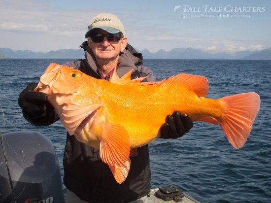 Soldotna, AK: Yelloweye Rockfish - Multi-species fishing out of Homer, AK