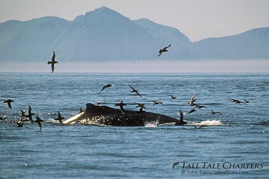 Soldotna, AK: Humpback Whale