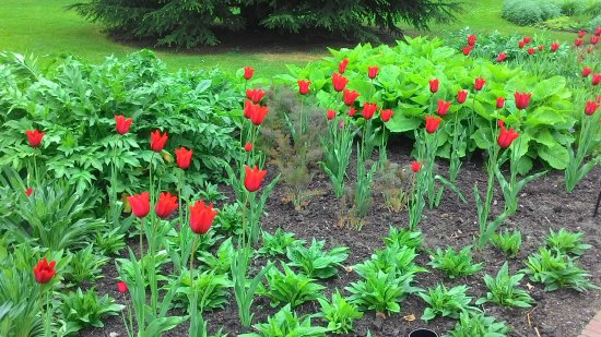 Кью, UK: Tulips in front of Palm House