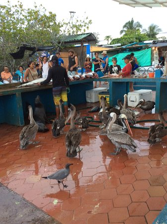 Grand Hotel Lobo de Mar: Fish market