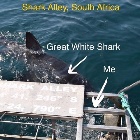 Kleinbaai, Sør-Afrika: This is me underwater, face to face with a Great White!