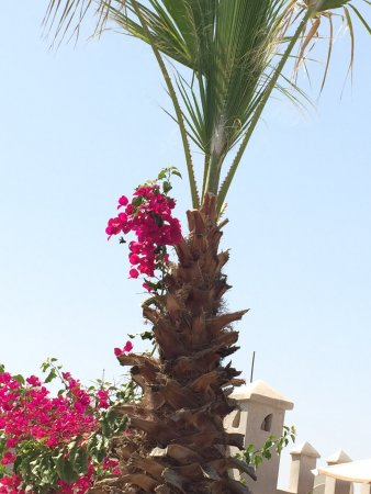 Riad Alma: Beauty on the roof