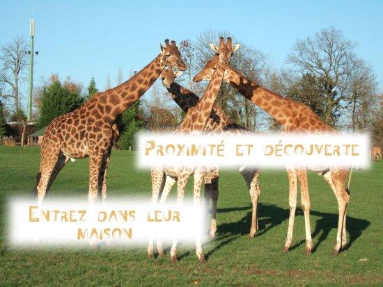 Zdjęcie Hermival-les-Vaux