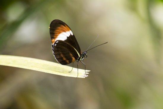 Leidschendam, Belanda: Schmetterling auf Halm