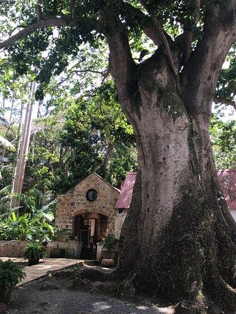 Saint Peter Parish, Barbados: photo3.jpg