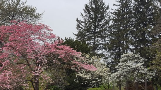 Reading, PA: the grounds in spring