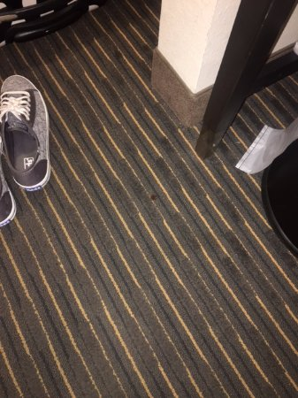 Comfort Suites Miami Airport North: Blood on floor